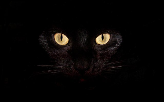 black-cat-wallpapers